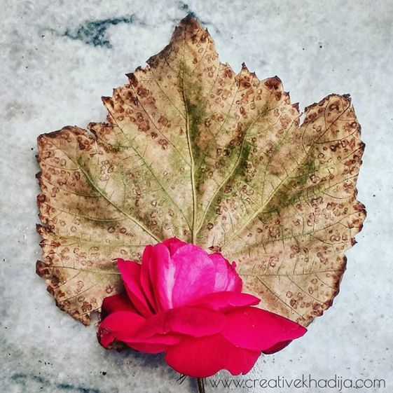 Rose flower & Fall leafs Photography