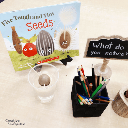 Avocado seed inquiry center for kindergarten science.