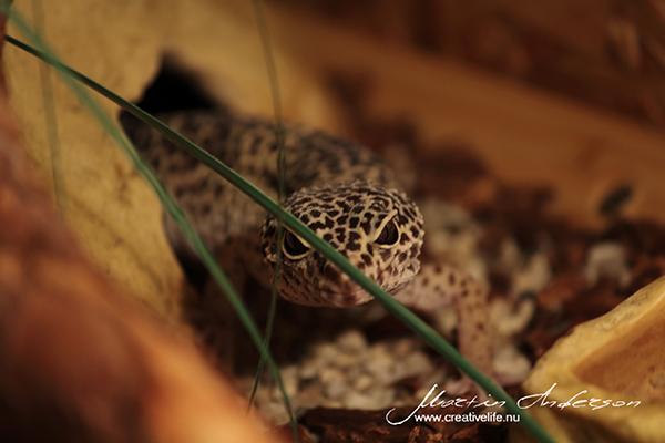 reptile 02