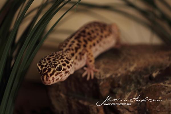 reptile 03