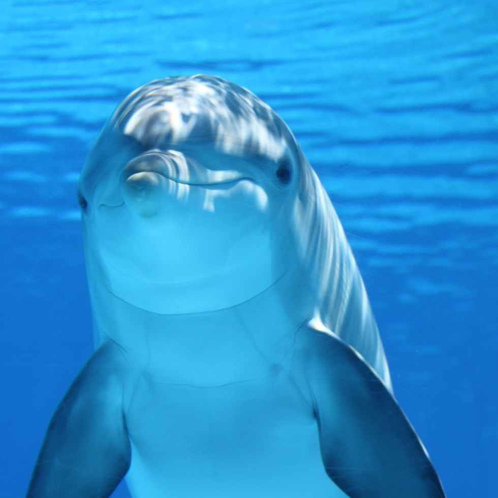 white and gray dolphin on blue water