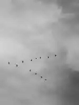 black bird flying in air