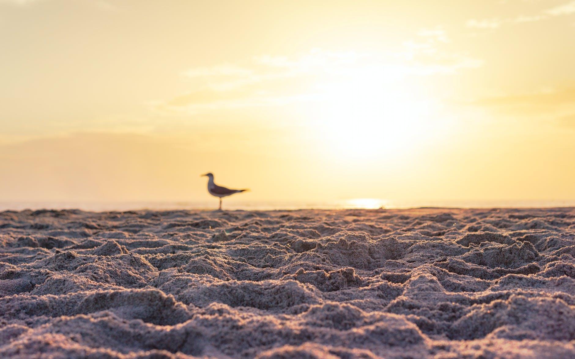 white bird on brown sand during sunset