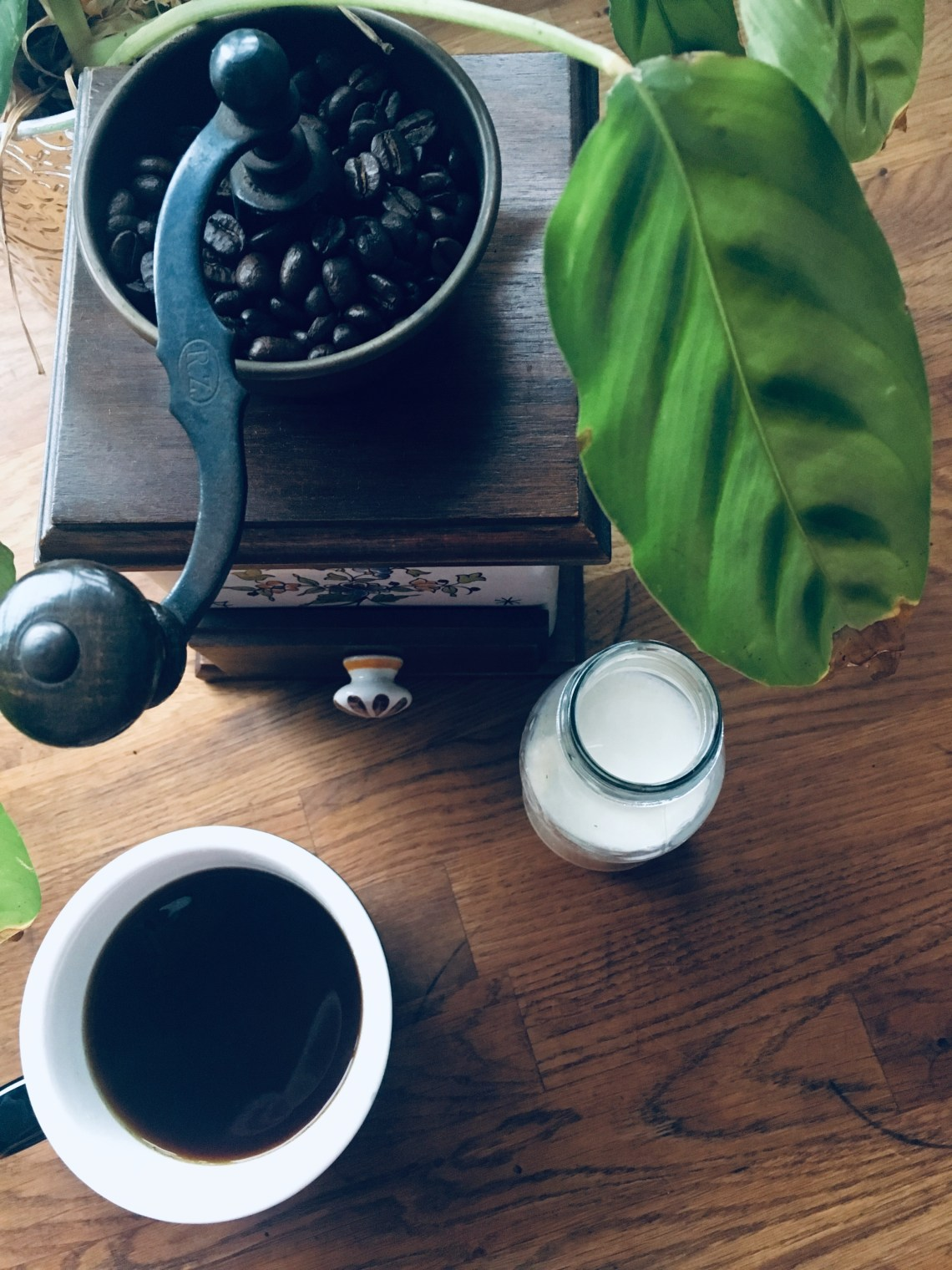 Coffee grinder and plant