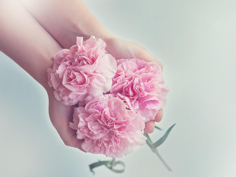 Beautiful pink flowers held in girls hands.