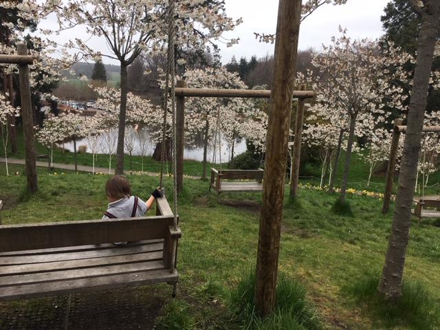 The view down to the lake at Alnwick Garden for cherry blossoms
