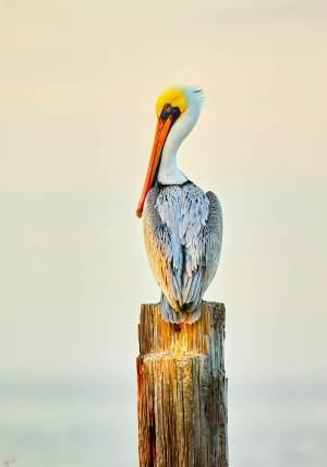 Wildlife Model Product Portrait