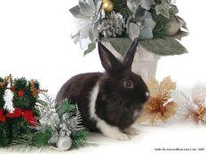 5bwallcoo_com5d_grey_rabbit_photo_wallpaper_83845