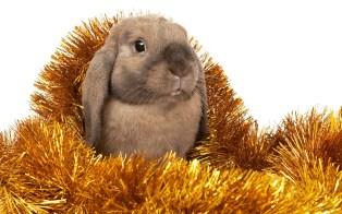 merry-xmas-and-happy-new-year-christmas-bunny_1920x1200_94388