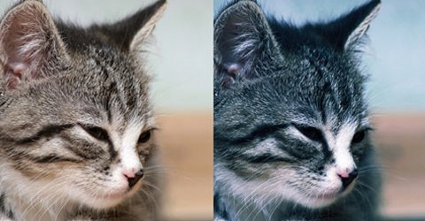 cat-photo-effect-action
