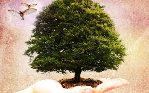 tree-in-dirt