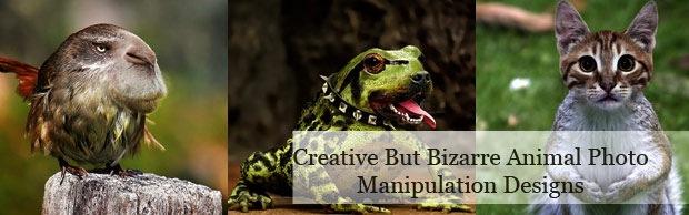 creative-bizaee-banner