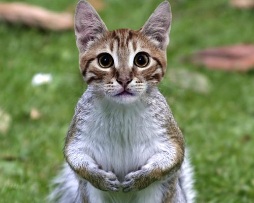 squel-cat