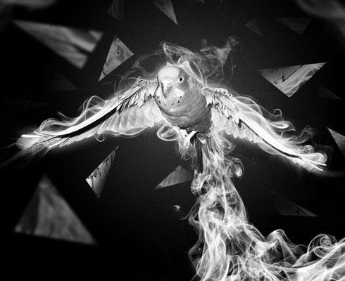 smoke-bird