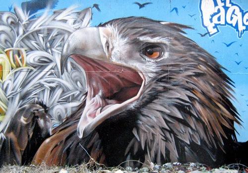 bold-eagle