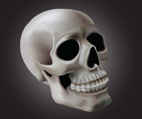 skull-illustration