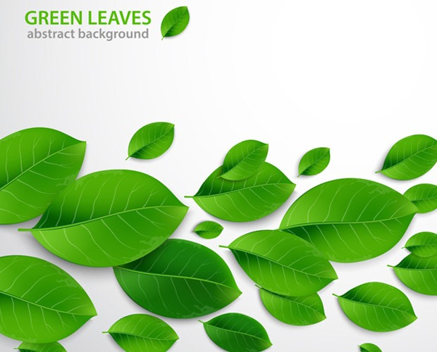 leafs-illustration