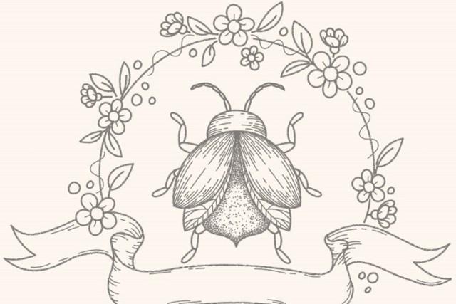 sketch-illustration