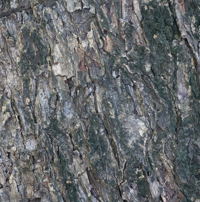 smalll-close-up-tree-bark-texture2.jpg