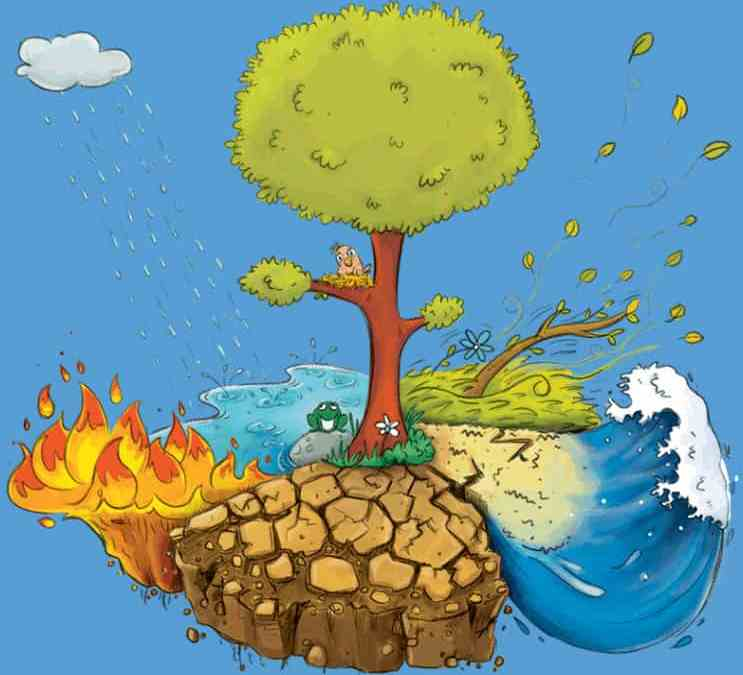 Birdie's Tree – Growing Together Through Natural Disasters