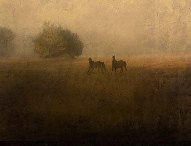 Jack Spencer photograph of Two Wild Horses