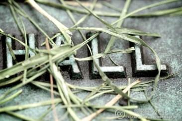 closeup of grass-covered plaque