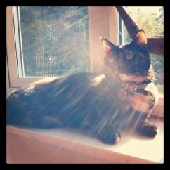 Cat, sunbathing