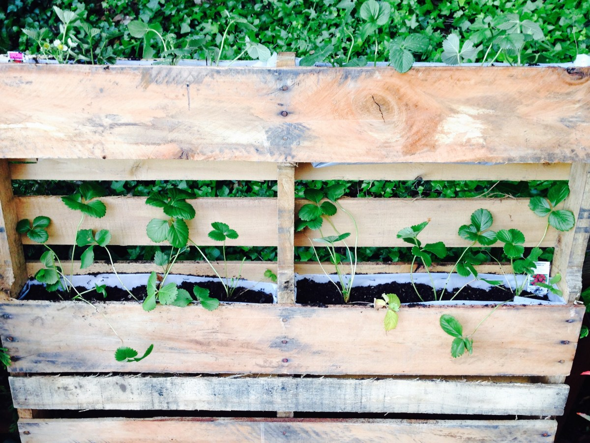 How to Make a Vertical Strawberry Planter out of a Pallet