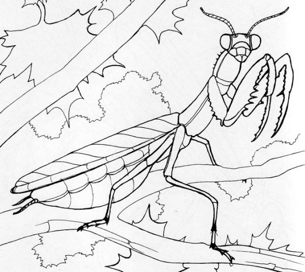 praying mantis coloring page