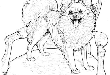 Papillon-Coloring Page