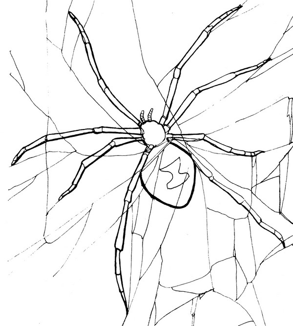 Black Widow Spider Coloring Page Photo Gallery