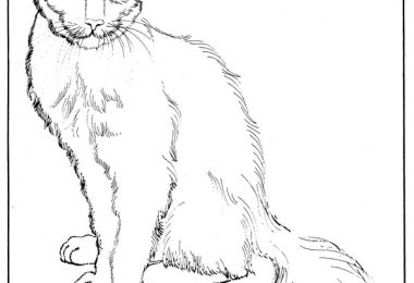 Coloring Page Balinese Cat