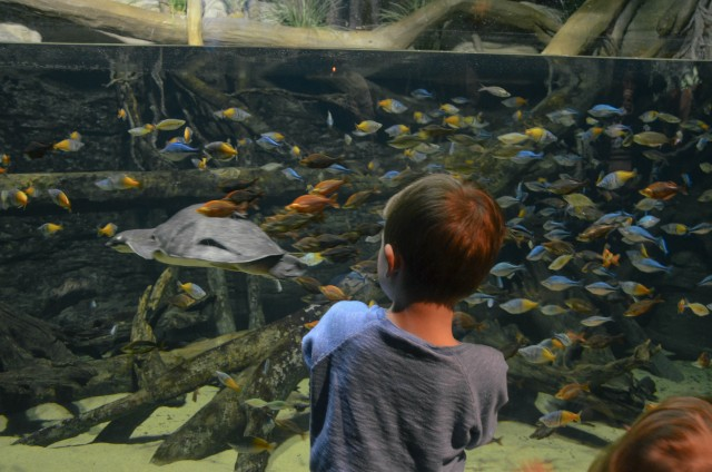 Discover the Rays at the Vancouver Aquarium