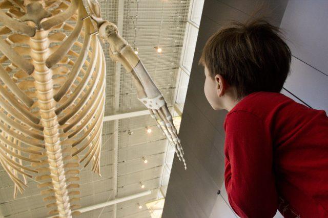 Kids World Vancouver Beaty Biodiversity Museum