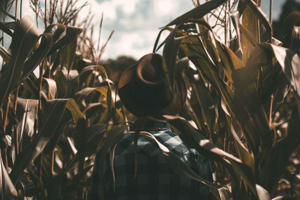 Abby Roadside: A Harvest Social