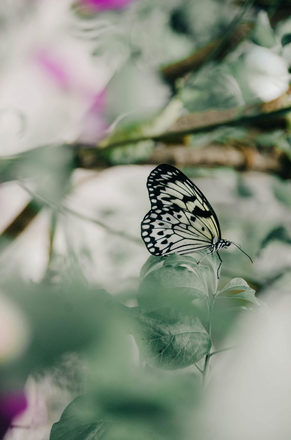 Things to do in Parksville Qualicum Beach | Butterfly World
