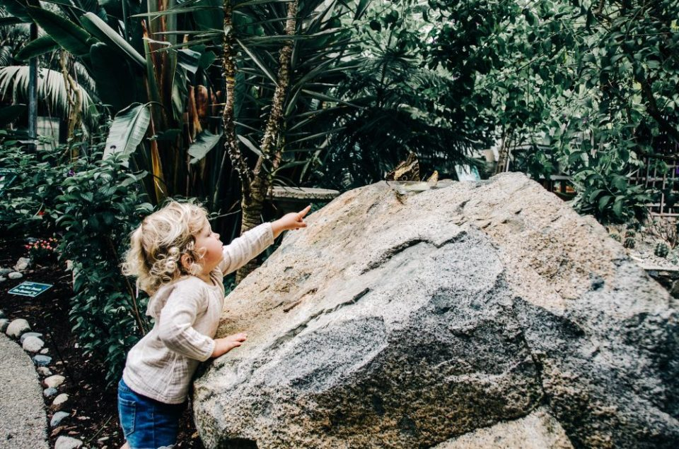 Things to do in Parksville Qualicum Beach   Butterfly World