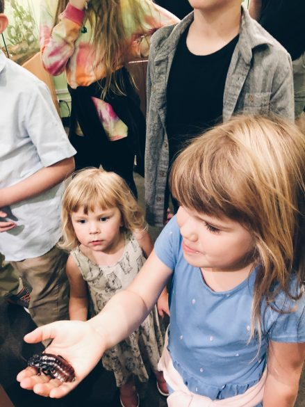 Victoria Bug Zoo | 10 things to do with kids in Victoria
