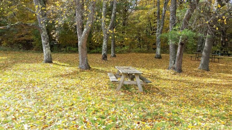vermont-foliage-leaves