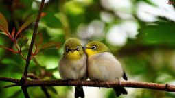 love-on-a-branch-14185-1366x768__880