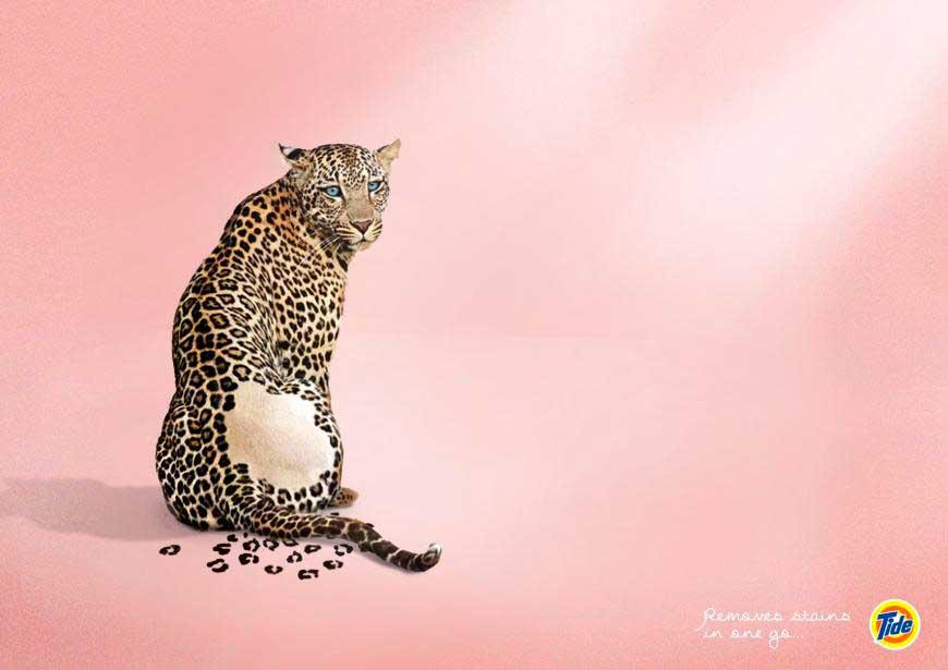 tide_leopard_aotw