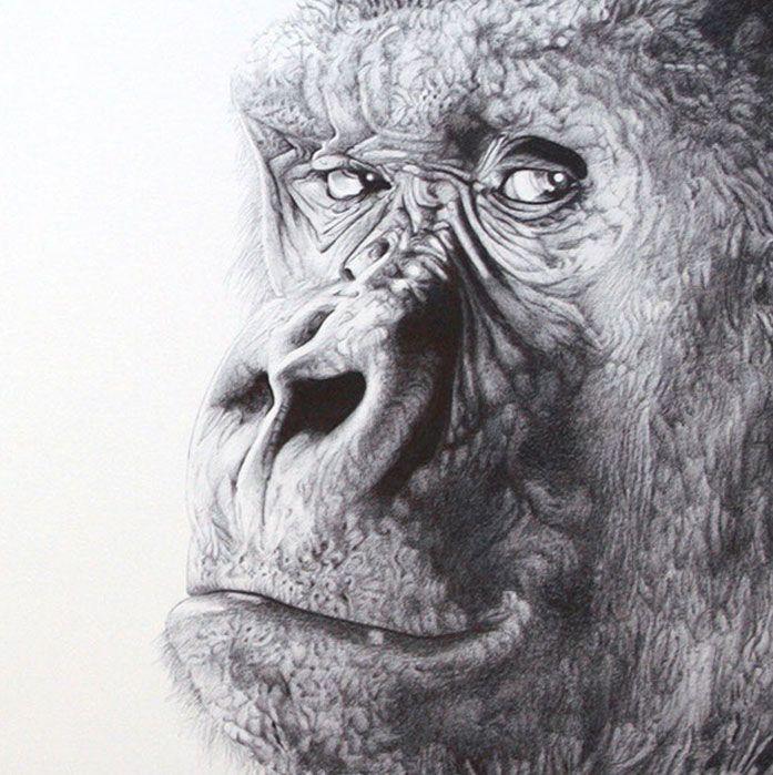 gorila paco marmol ilustracion