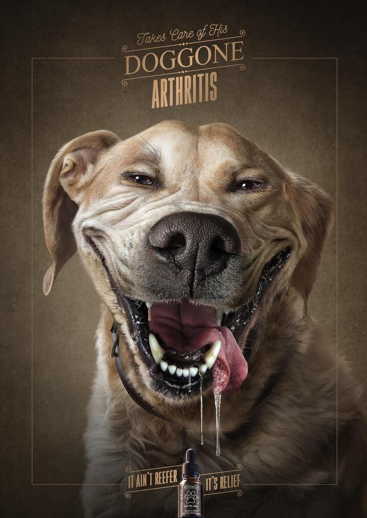 creatividad publicitaria de dolencia de perro