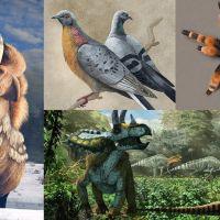 Ilustración naturalista de animales con ProCreate