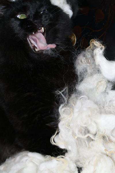 Cat vs. Fleece…