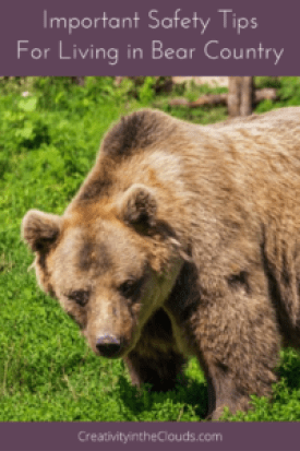 Safety Tips for Living in Bear Country