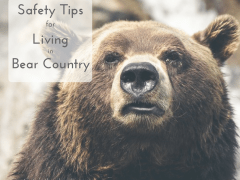 Living in bear country safely
