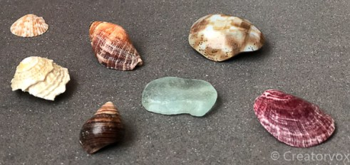 seashells that are shiny after mod podge application