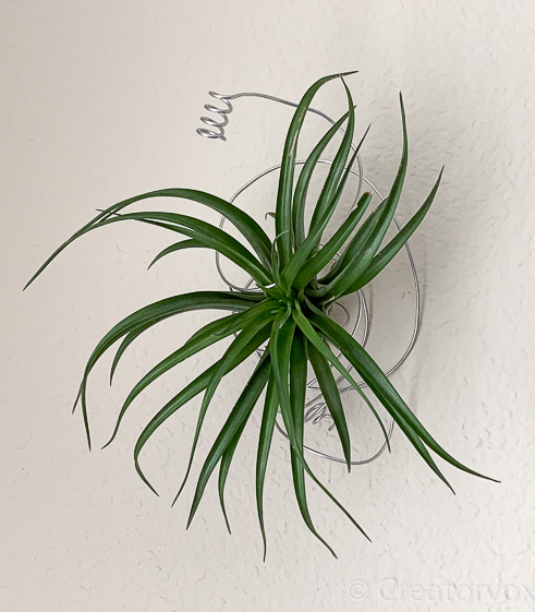artistic air plant holder made from coiled armature wire