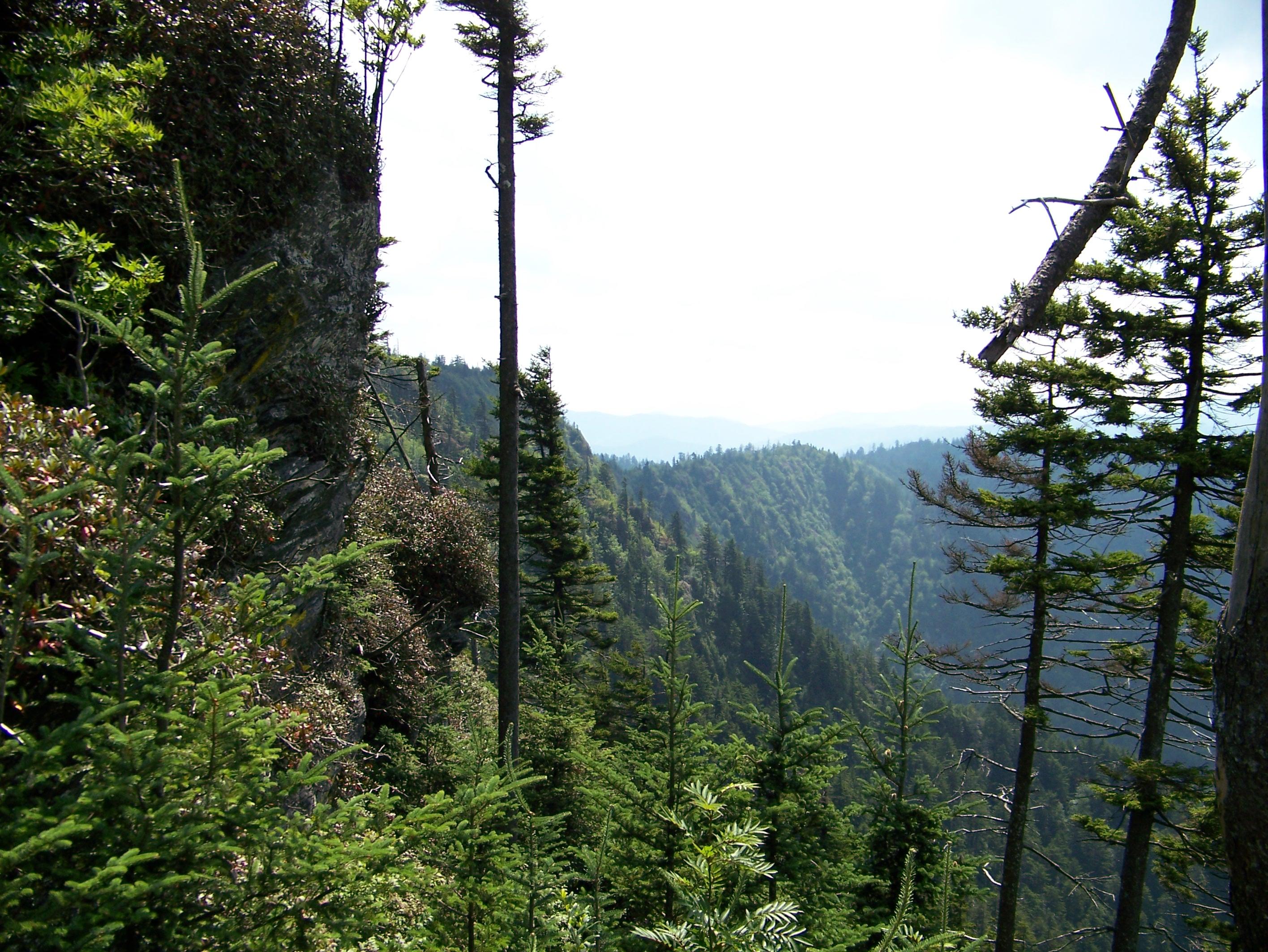 Eagle Cliffs